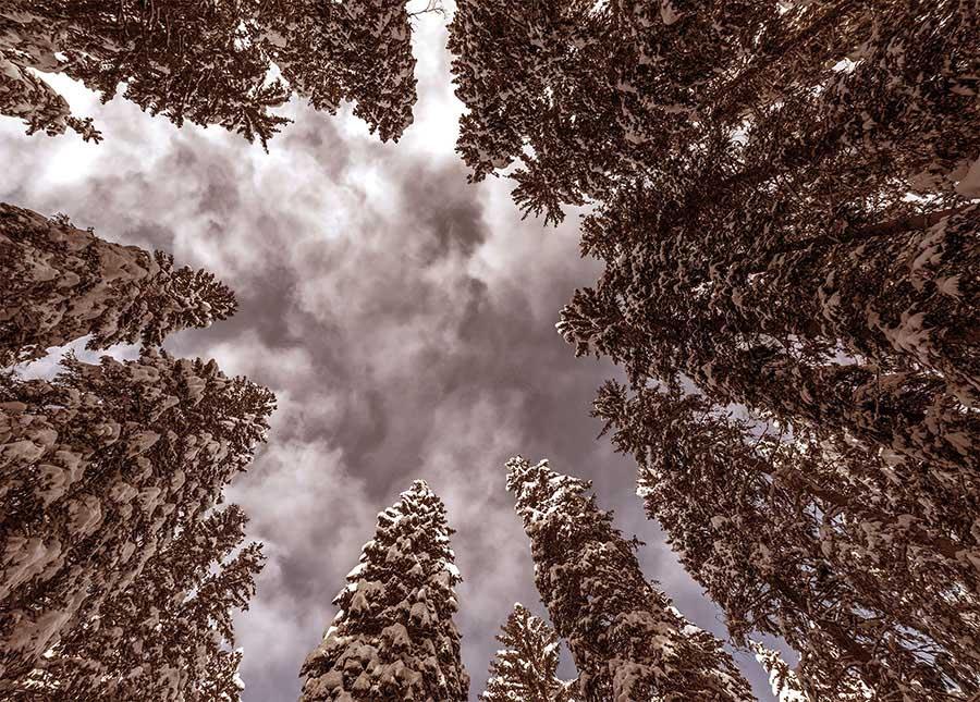 A fák látták (online regény) 7. rész