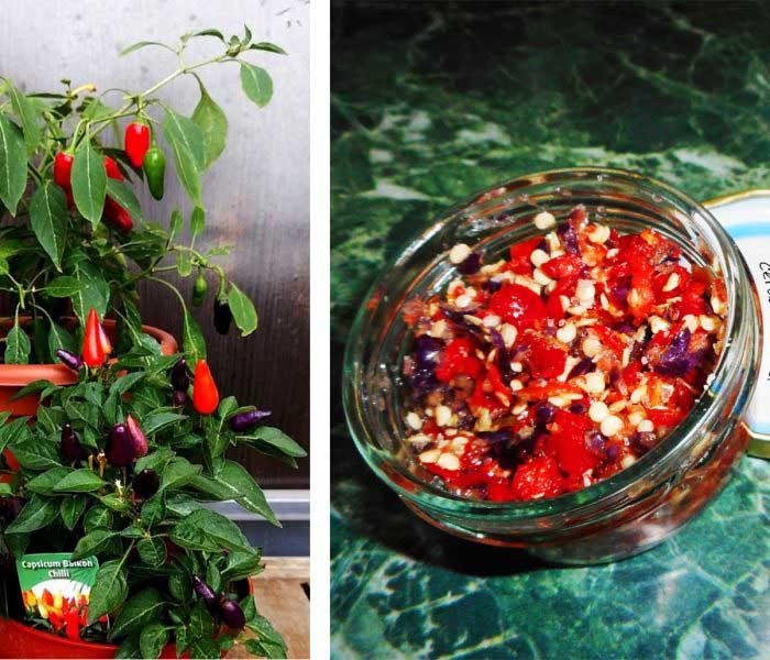 Chili krém – kis mennyiségben is