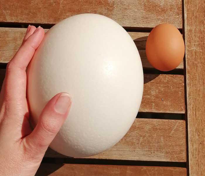 Strucc tojás projekt